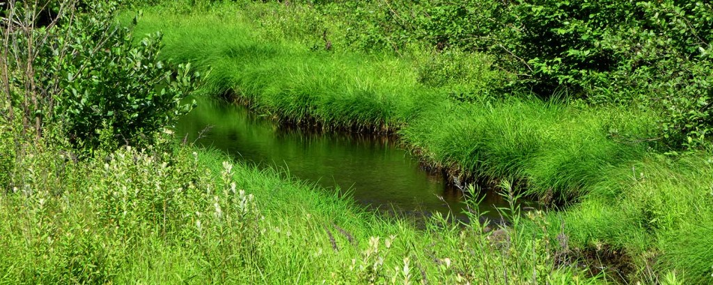 Shaded brook running through a meadow on a sunny day.