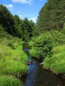 Parker Dam Stream