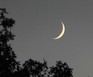 Telephoto of a crescent moon on the rise