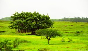 Varandha_Ghat-5