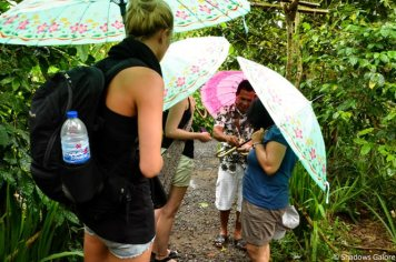 Umbrellas and a crash course on Balinese Botany