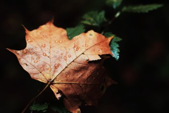 leafdrops-page