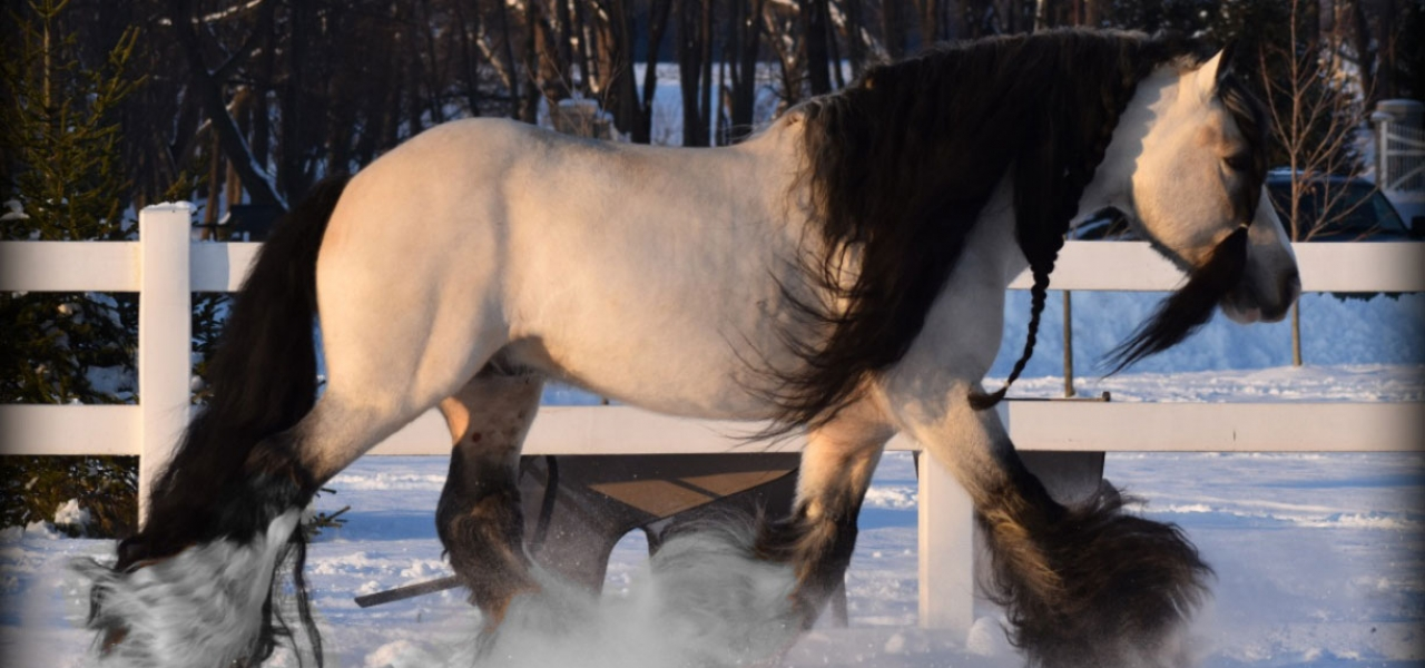 segway-snow-2