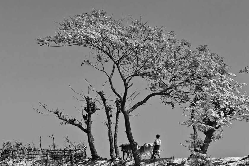 Photo: Sucharit Biswas Mithu