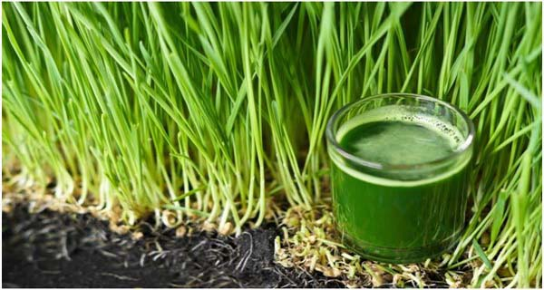 How To Use Wheat Grass To Reverse Grey Hair