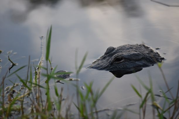 The Florida National Parks – Perfect Trifecta !