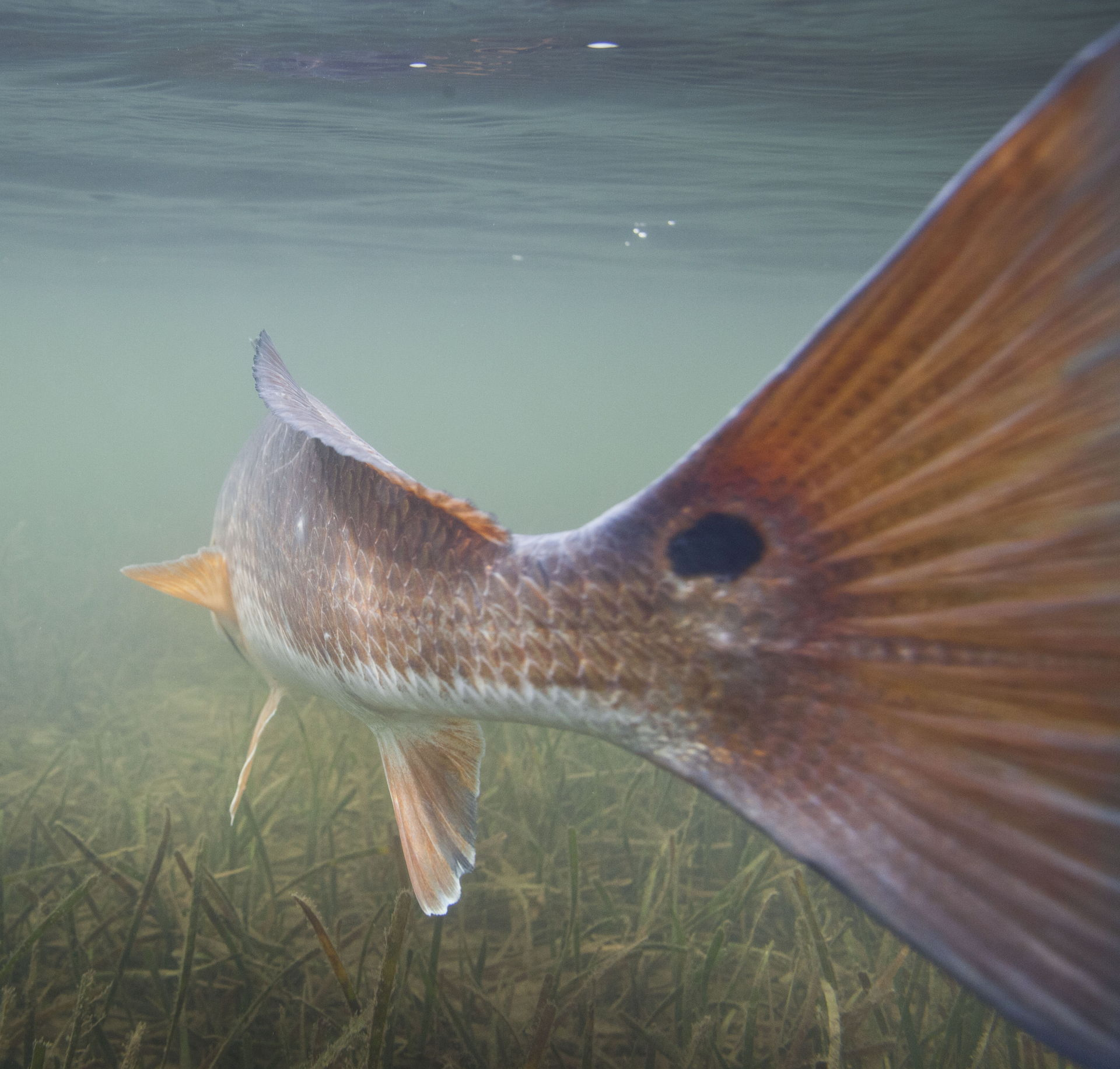 Panama City Beach Fly Fishing Photo Gallery Shallow