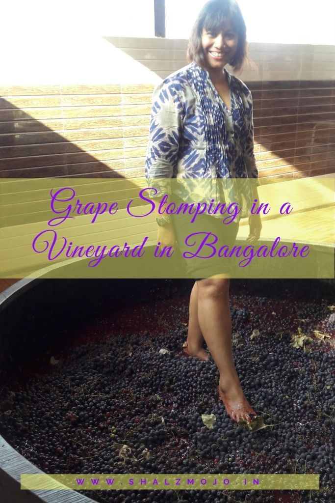 grape - stomping- vineyard- bangalore- holiday- incredible india- wine tasting
