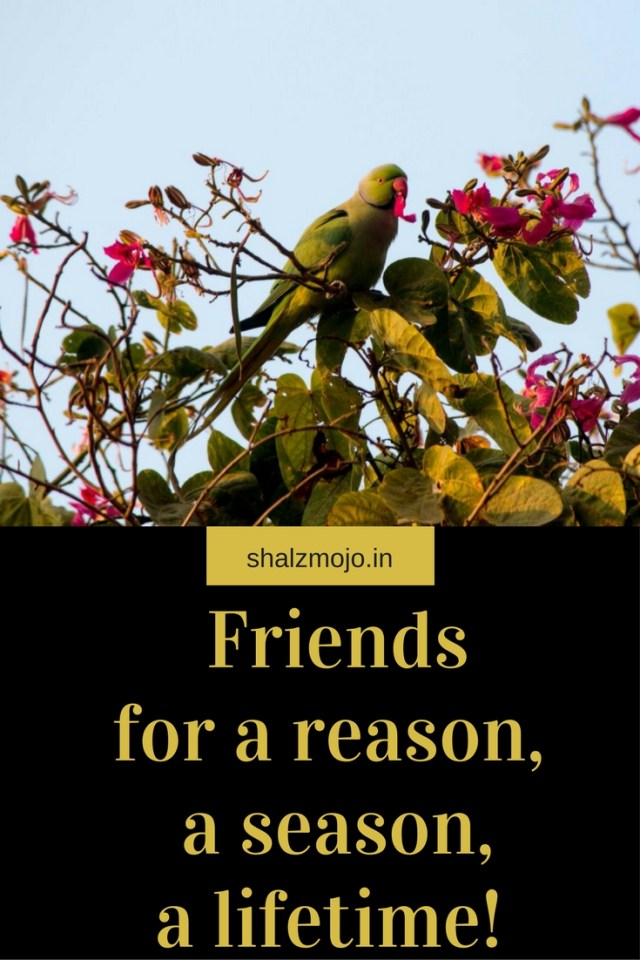 reason-season-lifetime-monday-musings-shalzmojosays-people-life-relationships