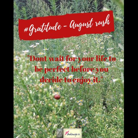 gratitude august rush field of wild flowers in the mountains with a ladybird