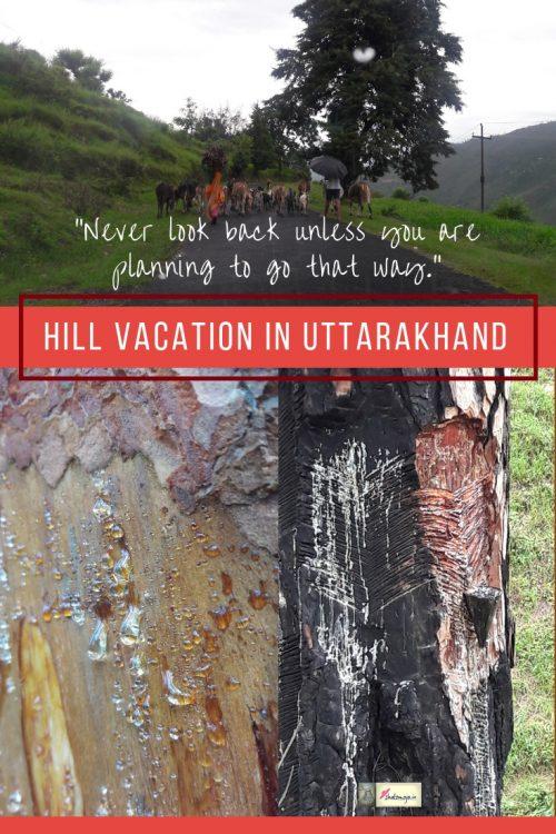 hills vacation goats pine tree nature mountains uttarakhand hills