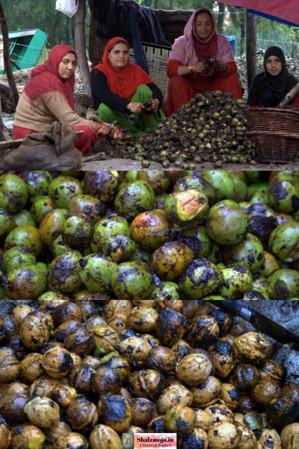 walnuts-green-kernels-kashmir-srinagar-dal-lake