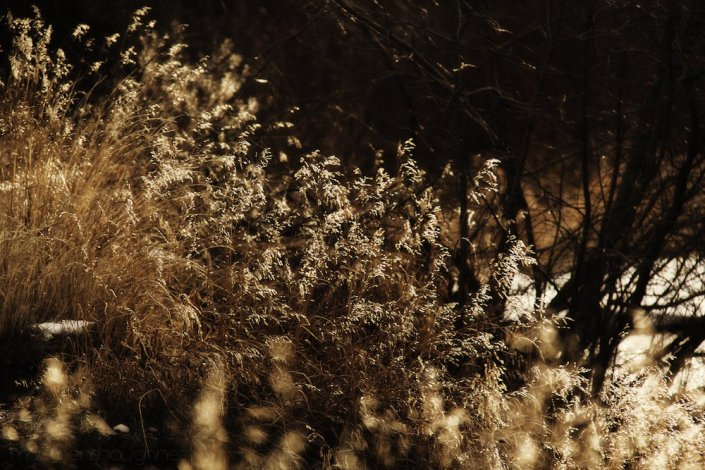 Grasses from the point of view of a deer