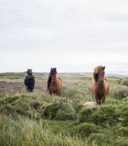 Cavalos no campo