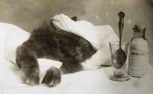 kitten recovery_smaller