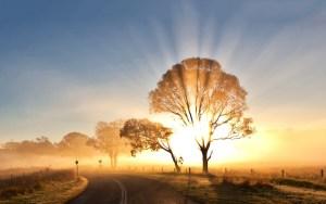 Sunrise Morning Tree Light