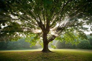 Shamanism Tree Light