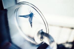 moth in glass