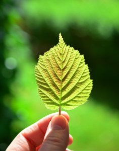 holding green leaf
