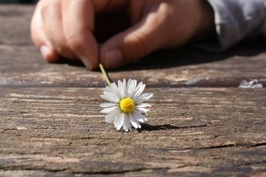 human hand daisy table