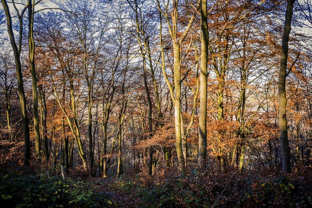 Bishops wood country park