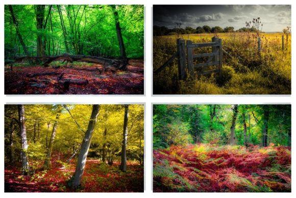 Fine art print sets of nature