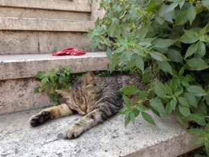 This kitty was the only one in sight, but he managed to find a comfy spot in the shade.