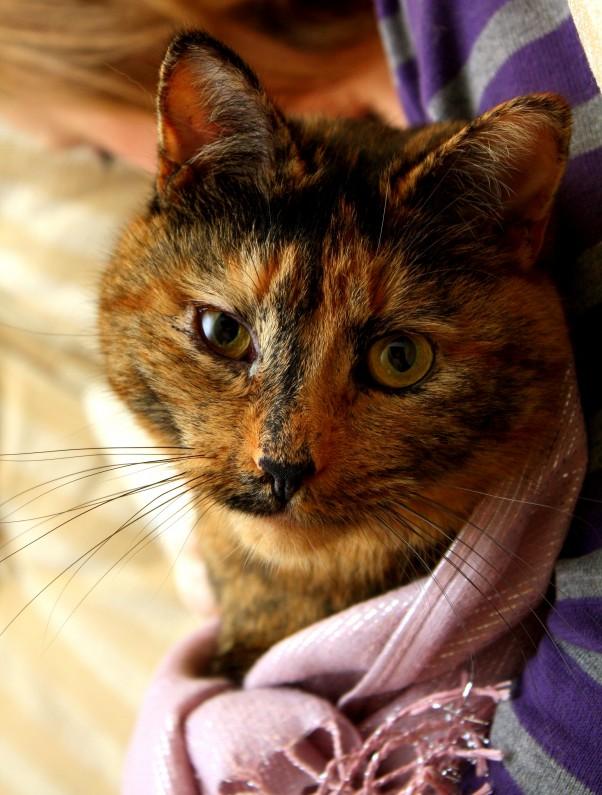 Coco - Cat Macro - Photo of the Week