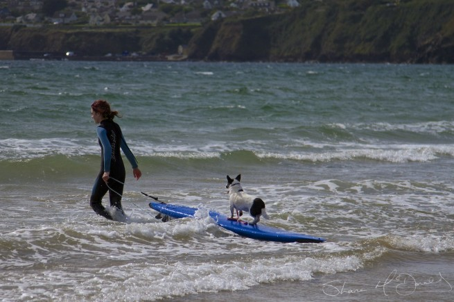 Tramore Dog Surfing - Yes, Dog Surfing! (1/5)