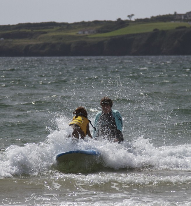 Tramore Dog Surfing - Yes, Dog Surfing! (3/5)
