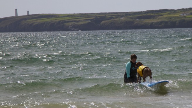 Tramore Dog Surfing - Yes, Dog Surfing! (4/5)