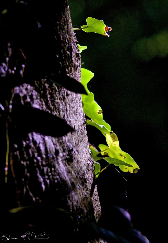 Light on Tree - Woodland Walk and nice light on tree