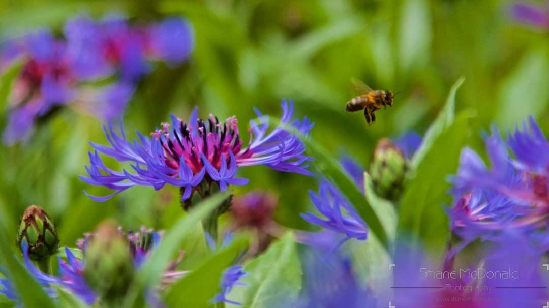 Shane McDonald Photography Waterford - Wildlife & Nature Photography