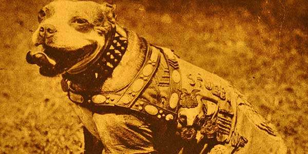 Shangrala's                                                           Sgt.
