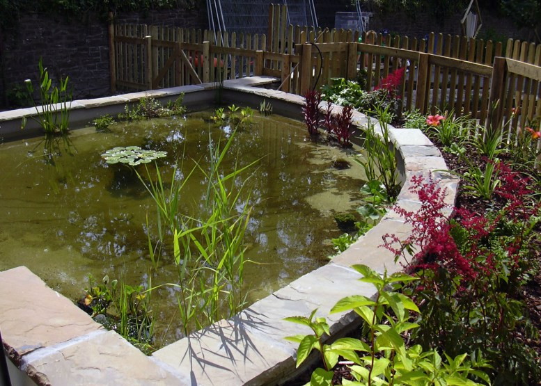 School Grounds - School dipping pond