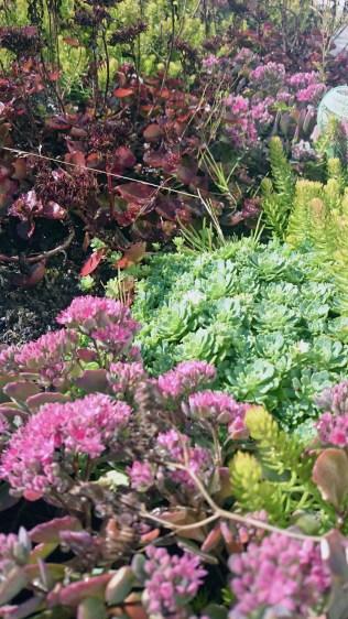 trough-plants