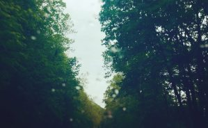 An upward-looking shot between two rows of green trees. The sun is low but glowing against the green leaves. The road between the trees cannot be seen, and a few raindrops have collected on the window or camera lens, layering over the image.