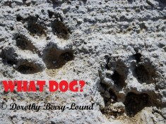 The Story Behind Barnie Paw Prints