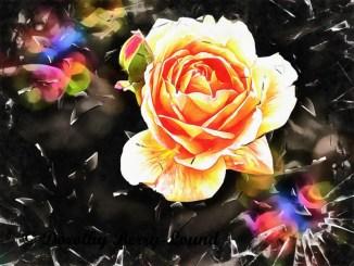 Symbolism of Roses