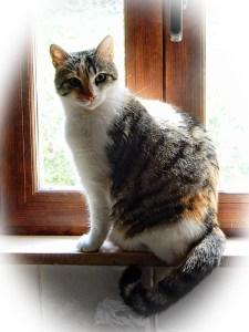 epileptic cat
