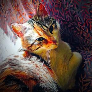 cat epilepsy