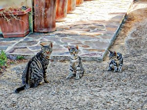Uncle Tippy takes the kittens orienteering