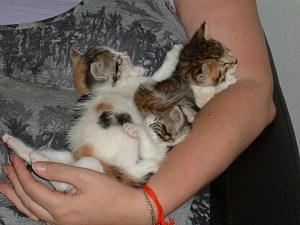 three kittens were abandoned