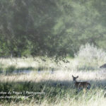 mother-and-fawn-morning-at-jacobs-well