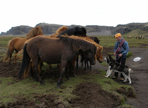 "Einar's dog, Rökkur (translates to ""dusk""), is as tentatively interested in the horses as they are in him."
