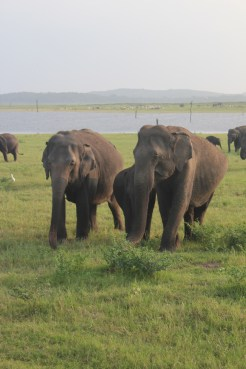 Elephant safari, saw several hundred out and about. Really amazing.