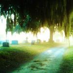 Misty Moss Road