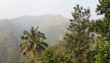 Die Kardamonberge/Südindien