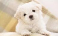 Puppy-02