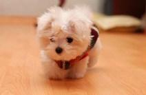 Puppy-09